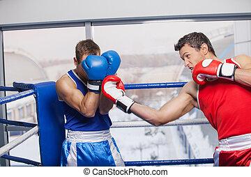 férfiak, boxing., 2 bábu, ökölvívás, képben látható, a,...