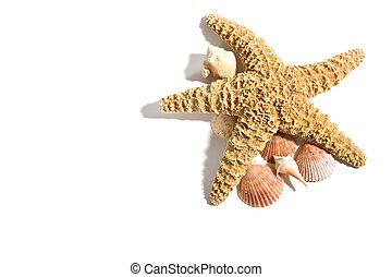 férias, praia, starfish