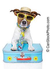 férias, turista, cão