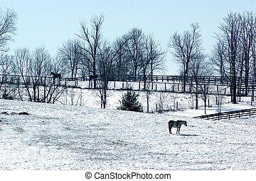 février, neige, sur, ky, cheval, ferme