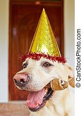 fête, anniversaire, chien