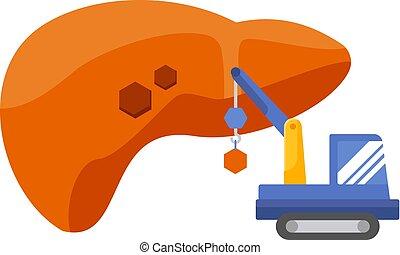 fígado, concept., regeneração