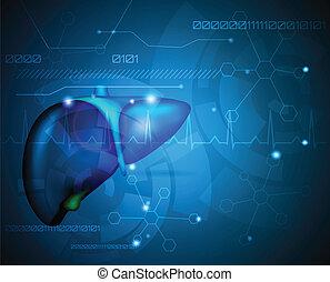 fígado, papel parede, médico