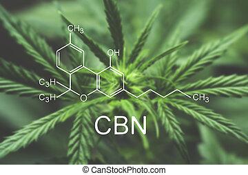 fórmula, cbn, macro, flor, cannabis, químico, marijuana