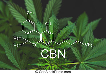 fórmula, médico, thc, saúde, crescendo, cbn, elementos, indústria, cannabinoids, cannabis, cbd, despancery, cannabinoid, marijuana, cânhamo, business.