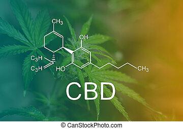 fórmula, macro, superficie, vista, hojas, cannabis, cima, cbd, agua, hojas, químico, gotas, verde, flor