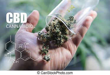 fórmulas, elementos, cbd, médico, marijuana, químico, strains, thc