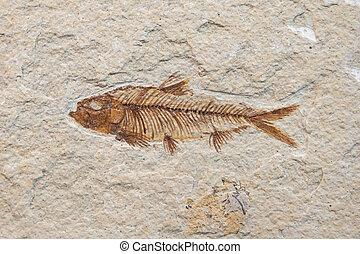 fóssil, peixe