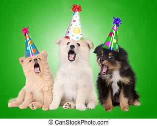 födelsedag, sjungande, valp, hundkapplöpning