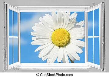 fönster, öppna, marguerite