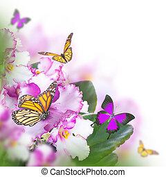 förbluffande, bukett, av, fjäder, violer, och, fjäril