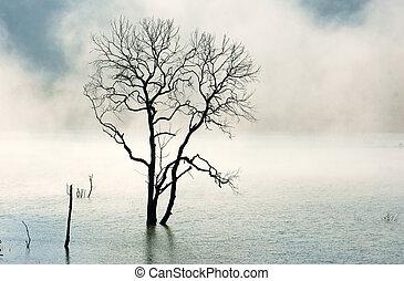 förbluffande, scen, natur, med, torka, träd, insjö, dimma