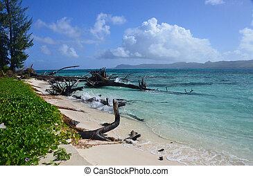 förbluffande, strand, lysande