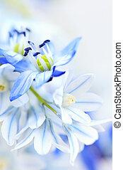 första, vår blommar