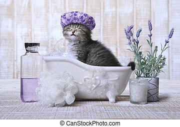 förtjusande, kattunge, in, a, badkar, avkopplande