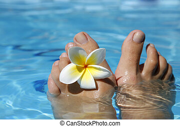 fötter, blomma