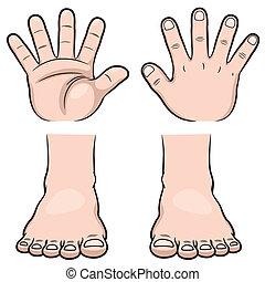 føder, hænder
