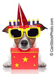 fødselsdag, hund