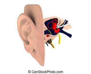 fülek