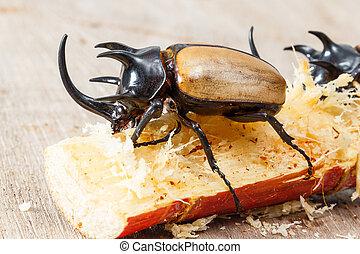 fünf, gelber , gehörnter käfer