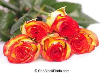 fünf, rosen, freigestellt, weiß