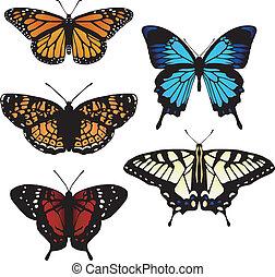 fünf, vektor, vlinders