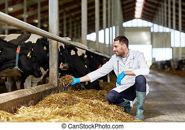 fütterung, bauernhof, kuhstall, tierärztliche , kühe, ...