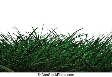 fű, cg