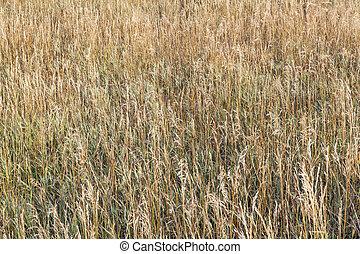 fű, kaszáló, alatt, késő, nyár