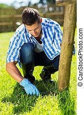 fű, kert, fiatal, otthon, ember, beállítás