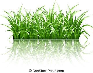 fű, vektor, zöld