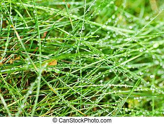 fű, zöld, harmat