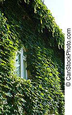 façade, fenêtre, blanc vert