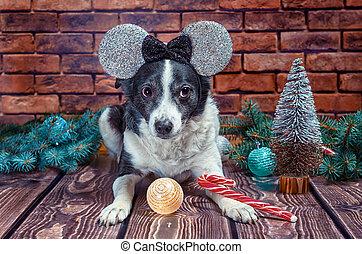 fałszywy, czarnoskóry, rok, pies, nowy, dorosły, biały, kłosie