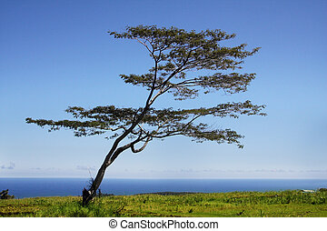 fa, által, a, óceán