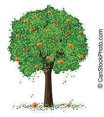 fa, árnykép, alma, gyümölcs