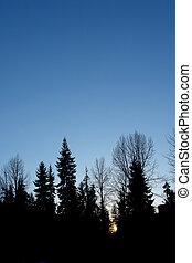 fa, árnykép