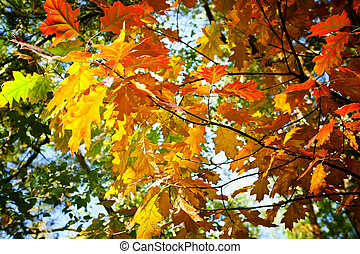 fa, alatt, ősz