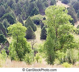 fa, alatt, természet