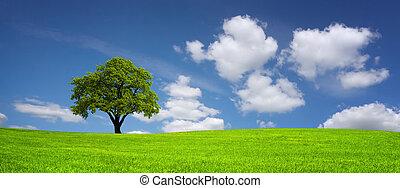 fa, képben látható, egy, kaszáló