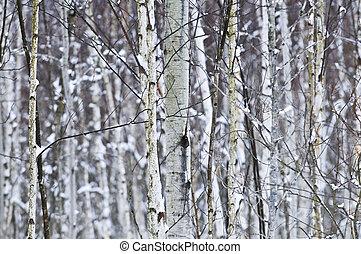 fa törzs in tél