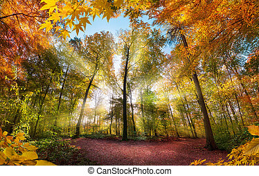 Fabulous autumn scenery in a colorful forest