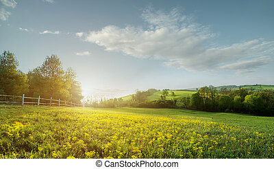 Fabulous landscape, field early in the morning , beautiful yellow flowers in the foreground