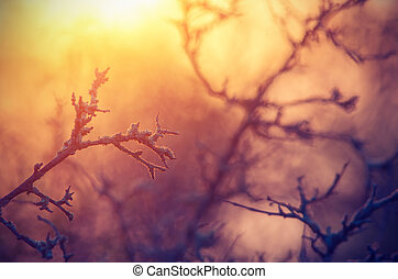 Fabulous picture in the form of tree branches at dawn and sunlig