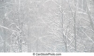 Fabulous winter weather. Heavy snowfall.