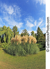 High decorative flower bed of reeds