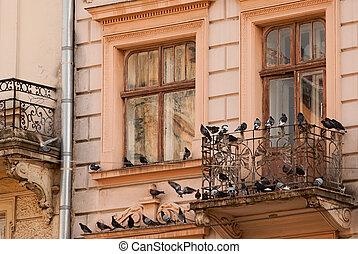 facade - old window and a balcony with pigeons. close-up
