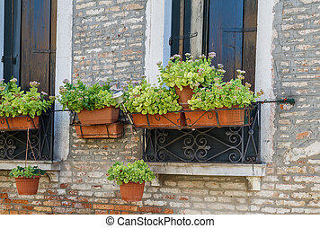 Facades Venice, flowers outside the window