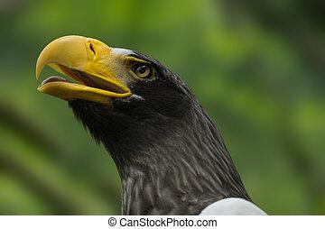Face east egle with open beak