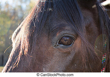 Face of a horse close up